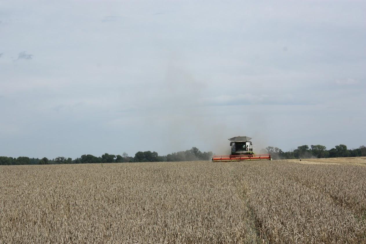 Група компаній «Грано Груп» розпочала збирання ранніх зернових